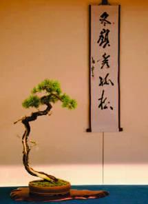 a-bonsai-2